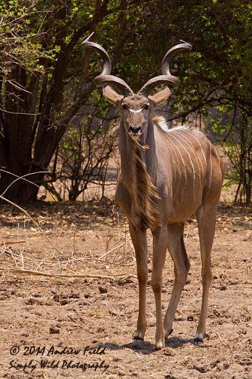 Kudu III_2011_10_21_2793_512x768px