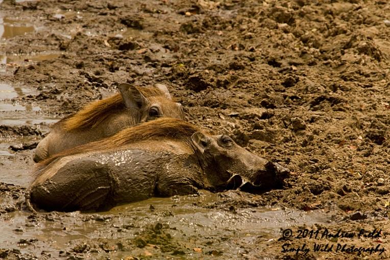 Mud Bath Mates_2011_10_22_3106_768x512px