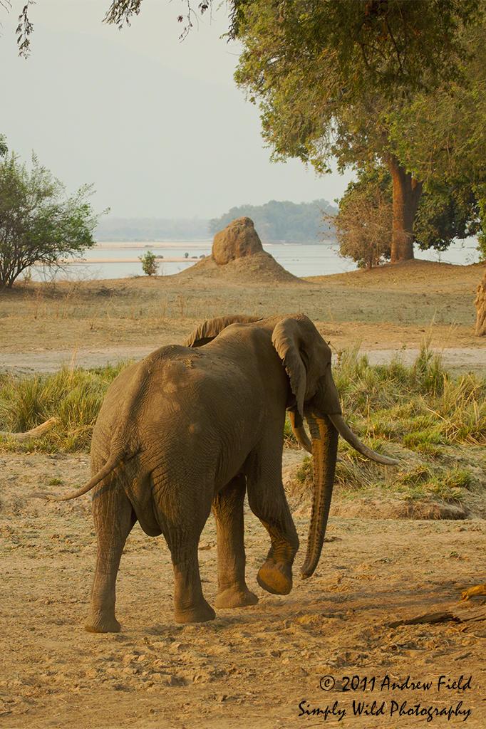 Elephant_2011_09_11_2292