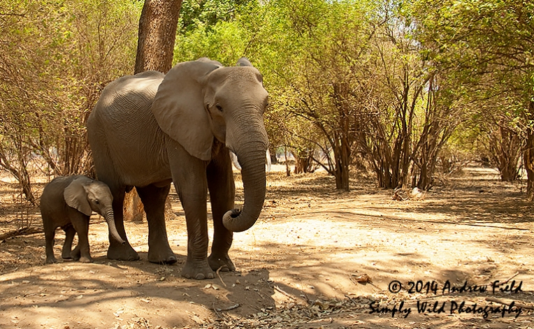 Mother and Child Elephant_2011_10_23_3412_768x474px