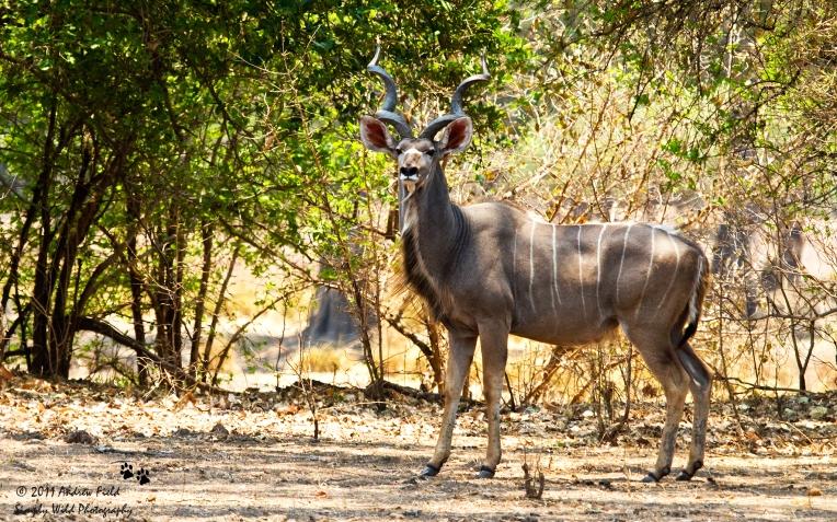 Kudu_2011_10_21_2797
