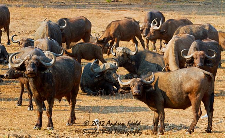 Buffalo Lager_2012_09_05_6359_768x474
