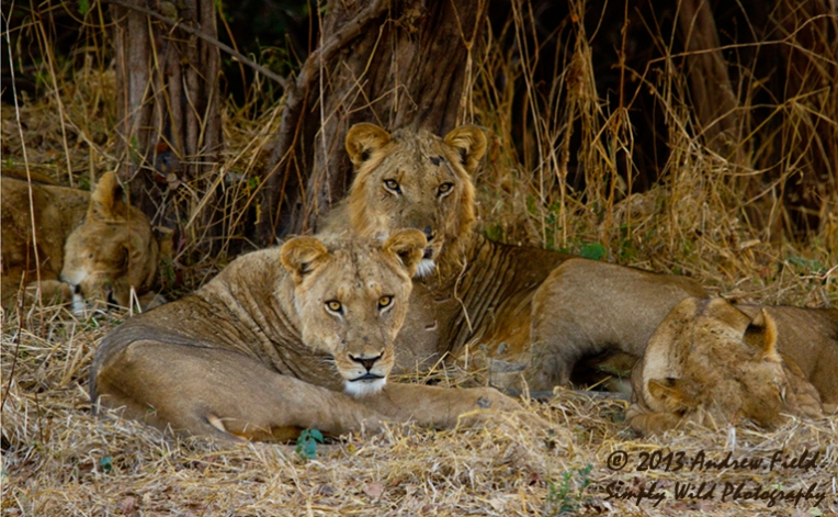 Into the Lions Den_2013_06_04_9384_768x474px