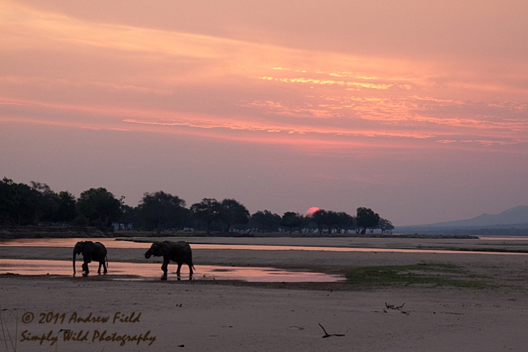 Valley Sunset with Elephants_2011_10_21_3383_768x512px