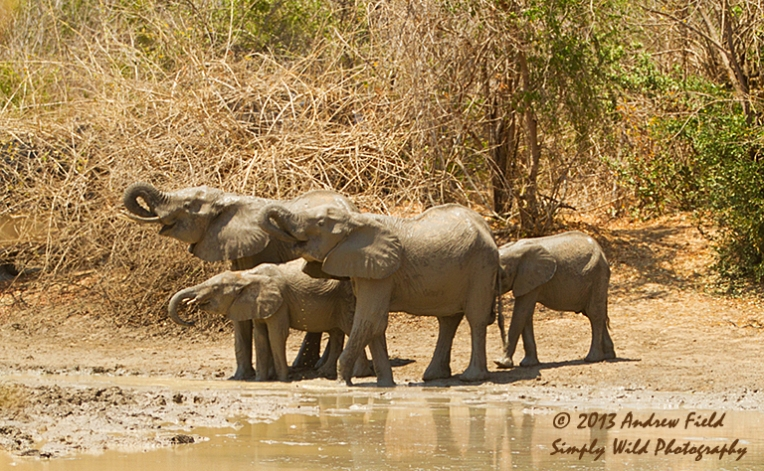 Elephants at the Pond_2013_10_07_0376_768x474px