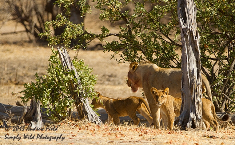 Cubs in Transit_2013_10_04_1266_768x474px