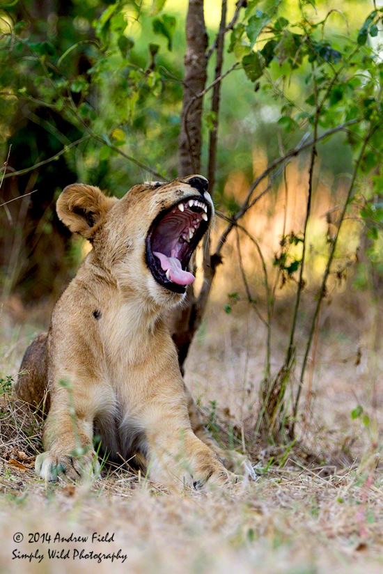 Yawn or Threat_2014_05_17_0525_1024px