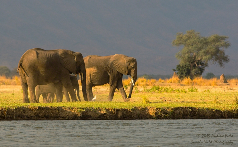 Flood Plain Elephants_2014_10_05_2632