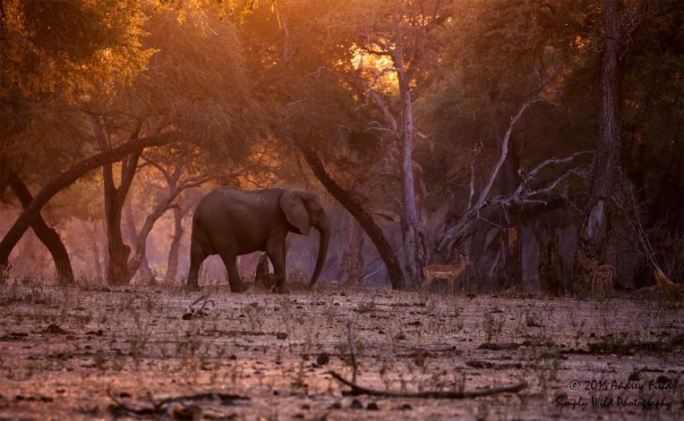 elephant-and-impala_2016_10_15_3313