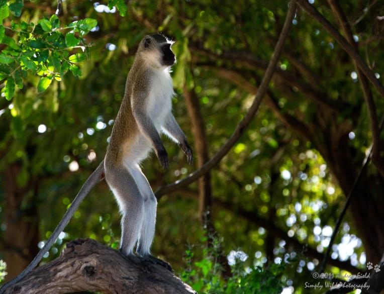 Primate Evolving_2015_05_18_7613
