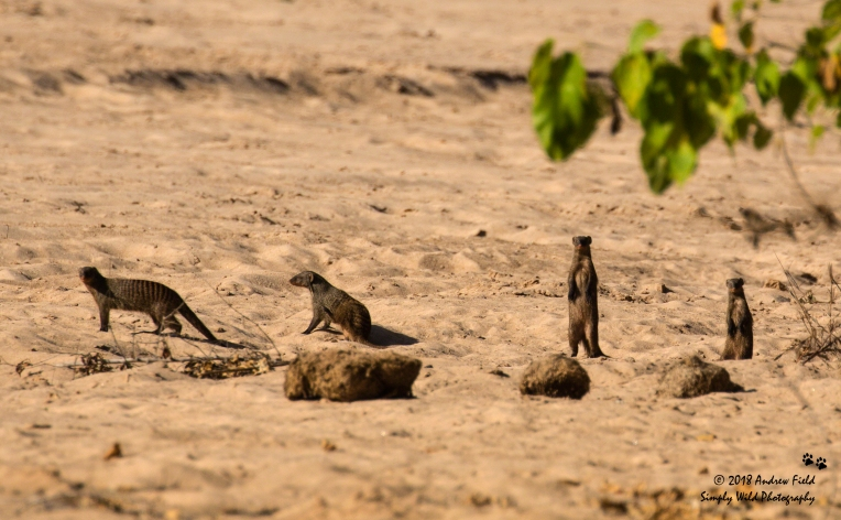 Mongoose Party_2018_07_26_0865