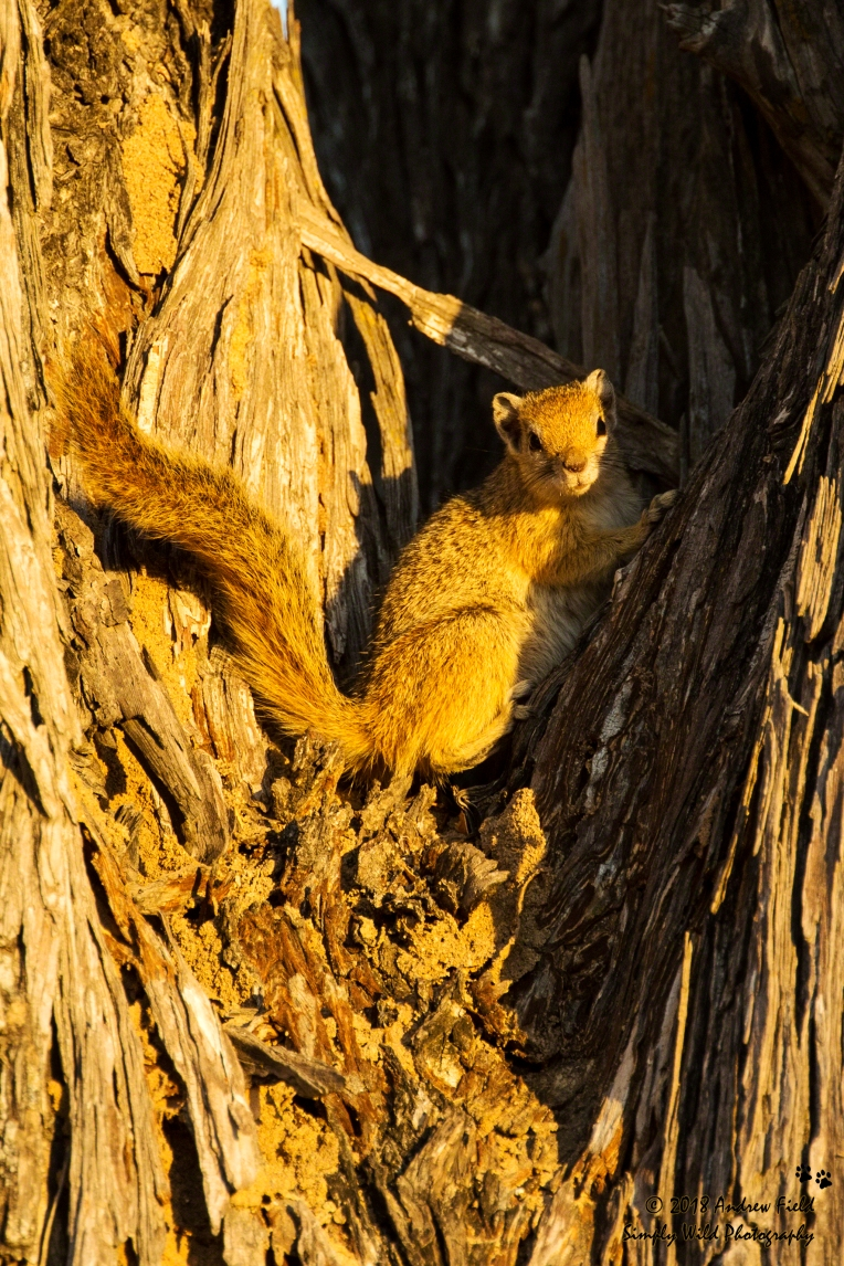 Squirrel Basking_2018_07_26_1640