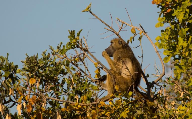 Baboon Lookout_2018_07_30_2631